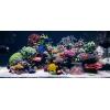 Изготовление,  установка, оформление, чистка и обслуживание аквариумов в Сочи