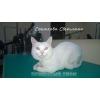 стрижка кота в колтунах в зоосалоне и на дому